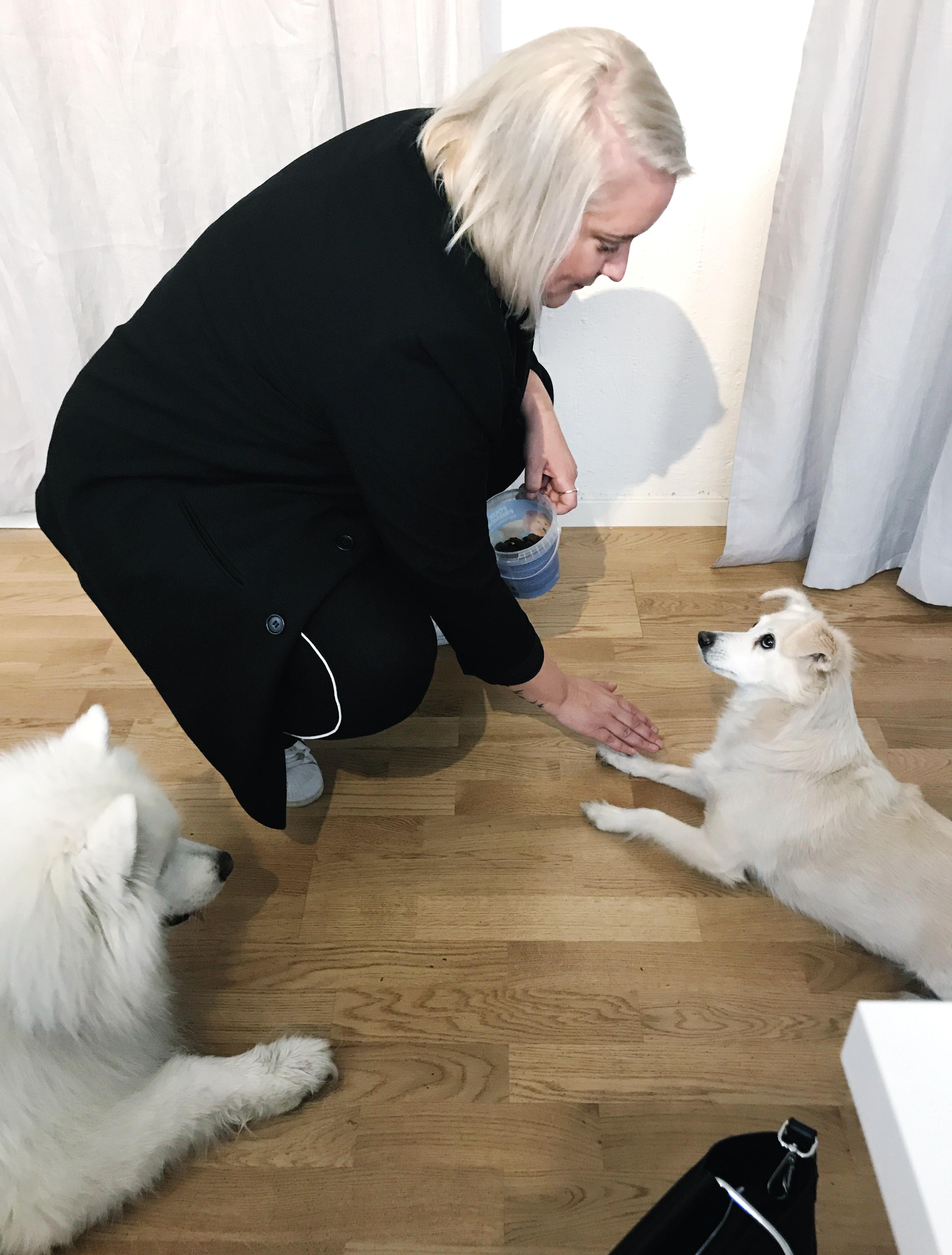 Linda tränar hundarna
