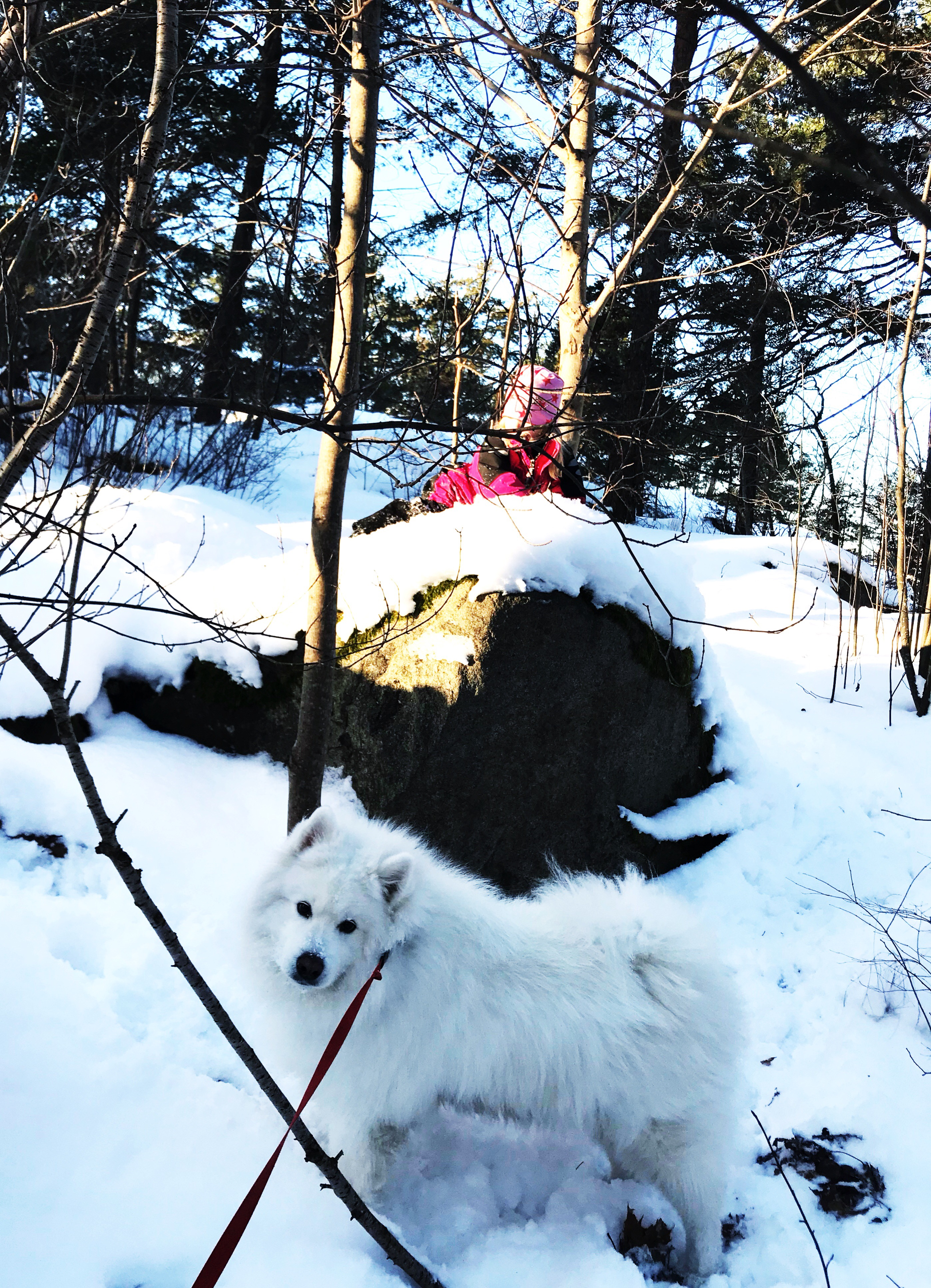leka i skogen
